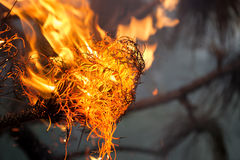 Fourth of July bonfire. Close up image of a burning pine branch in a Fourth of July (U.S. Independence Day) celebration. Image shows the intense orange, yellow stock photography