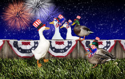 Fourth July Duck Party. A group of mixed breed ducks celebrating the US 4th of July holiday. Ducks wearing patriotic red, white and blue hats, bunting hanging on Stock Image