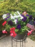 Fourth of July flower basket Stock Photo