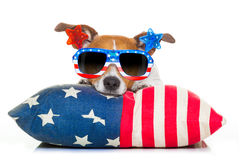Fourth of july independence day dog. Jack russell dog celebrating 4th of july independence day holidays with american flag and sunglasses, isolated on white Royalty Free Stock Images
