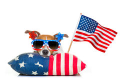 Fourth of july independence day dog Royalty Free Stock Photography
