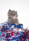 Fourth of July Kitten Stock Images