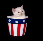 Fourth of July Kitten Royalty Free Stock Images