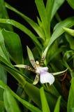 Fower d'orchidée Photographie stock libre de droits
