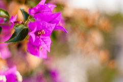 Fower in the garden Royalty Free Stock Photography