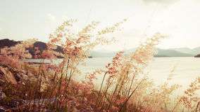 Fower grass blurred foreground of mountains Stock Photos