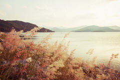 Fower grass blurred foreground of mountains Stock Images