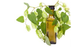 Fower with the leaf hops. Bottle & Natural Medicines. royalty free stock images