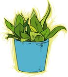 Fower in Pot. Domestic flower in  a blue pot. Vector illustration Stock Photo