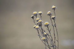 Flower in winter looking desiccated Stock Photo