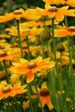Fowers amarillos Imagenes de archivo
