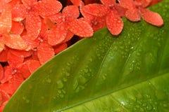 Fowers colorati rosso piacevole con la foglia verde Immagine Stock Libera da Diritti