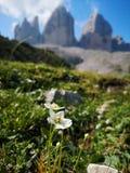 Fowers en la montaña fotos de archivo libres de regalías