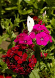 Fowers et papillon Image libre de droits