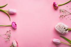 Fowers na różowym tle Mieszkanie nieatutowy kosmos kopii fotografia royalty free