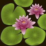 Fowers van Lotus Royalty-vrije Stock Foto
