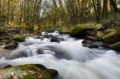 Fowey del fiume della cascata alle cadute di golitha   Fotografia Stock Libera da Diritti