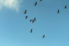 fowl fotos de stock royalty free