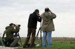 Fowlers sont observation d'oiseau photo stock