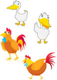 Fowls Royalty Free Stock Images