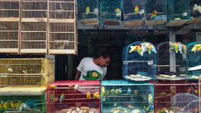 Depok Market Solo. Someone is looking birds at Depok Pets and Bird Market, Surakarta, Central Java, Indonesia. 8/8/2014. Depok Pets and Bird Market always stock images