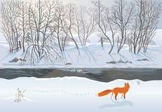 Fox在冬天森林里 库存图片