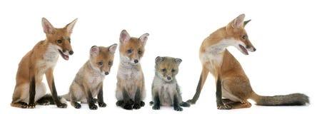 Fox家庭在演播室 图库摄影