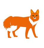 Fox,动物, 库存照片
