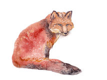 Fox, акварель, эскиз, краска, животные, иллюстрация Стоковое Изображение RF