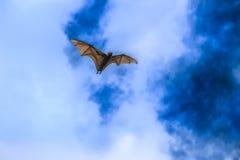 Fox летания Стоковое фото RF