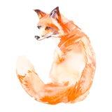 Fox на белой предпосылке акварель вектор Стоковая Фотография