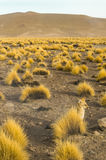 Fox спрятанный в кустах Стоковое фото RF