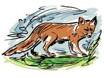 Fox Stockbilder