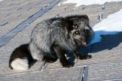Fox Photos stock