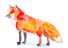 Fox Stock Photography