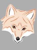 Fox头 免版税库存照片
