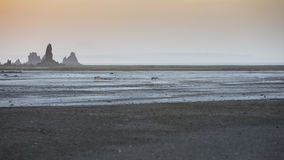 Black-backed jackals agains sunset Royalty Free Stock Photo