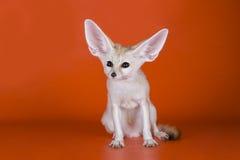 Fox auf einem farbigen Hintergrund Lizenzfreies Stockfoto