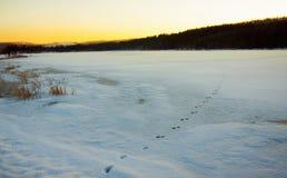 Fox-Bahnen im Winter auf dem See im Wald Stockfotos