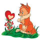 Fox in a clearing looking at flower. Red fox in a clearing looking at flower of hearts royalty free illustration