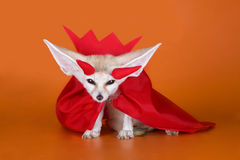 Fox on a colored background.  Royalty Free Stock Image