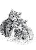 Fox Cubs del bambino Fotografie Stock Libere da Diritti