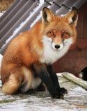 Fox de un cuento de hadas fotos de archivo