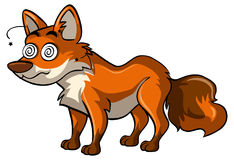 Fox with dizzy face Stock Images