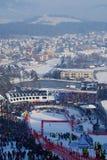 Fox dorato 2013 a Maribor Immagini Stock