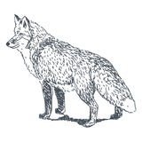 Fox drawing Stock Photography