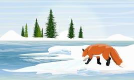 Fox en la orilla nevosa del lago Árboles de la picea en el horizonte stock de ilustración