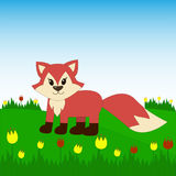 Fox on the field with tulips. Fox in cartoon style on the field with tulips Stock Photography