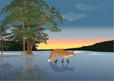 Fox on frozen lake illustration Royalty Free Stock Image