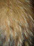 Fox fur Royalty Free Stock Photos